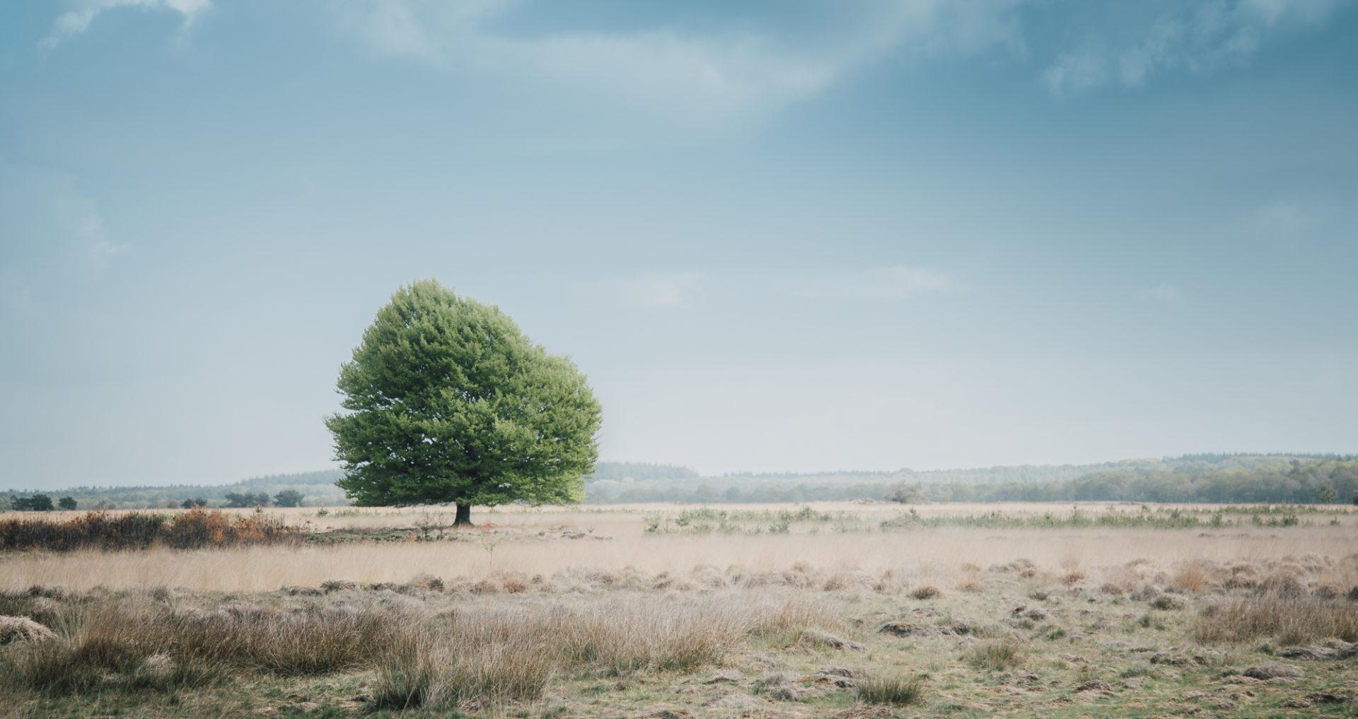 """Nationalpark """"De Hoge Veluwe"""""""